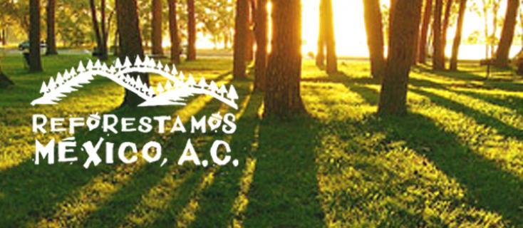 Reforestamos México, programa del Grupo Bimbo® Verde